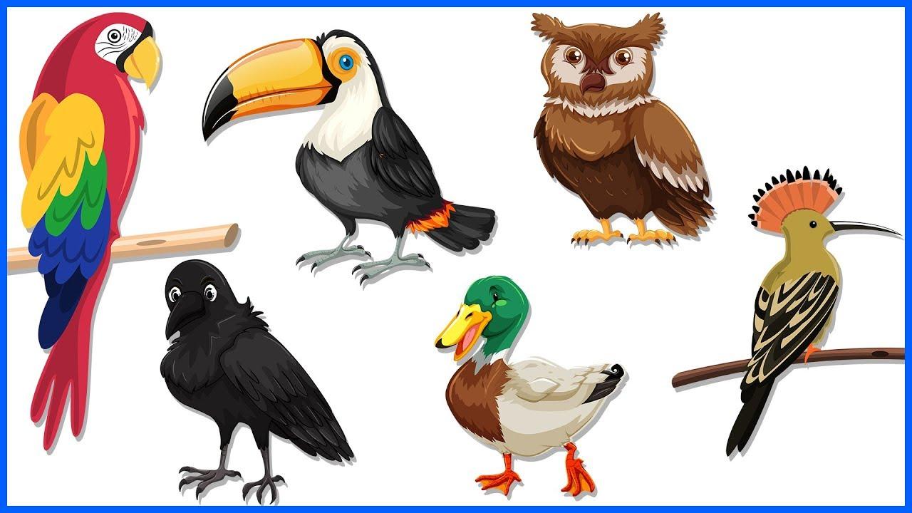 ह द म पक ष य क न म स ख Bird Names In Hindi Drawing For Kids Birds Name Youtube