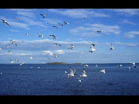 Пляж Одессы — Продмаш. Чайки на море