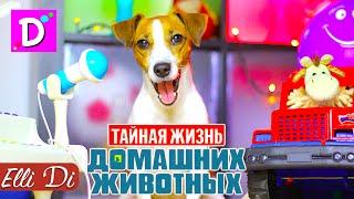 ПЕСНЯ ТАЙНАЯ ЖИЗНЬ ДОМАШНИХ ЖИВОТНЫХ | СОБАКА ДЖИНА ПОЁТ | Elli Di Собаки