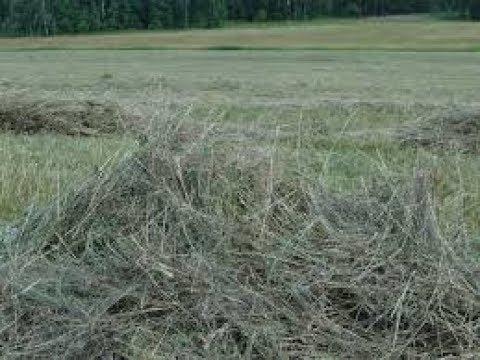 Как сделать травяную муку видео фото 145