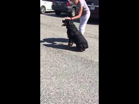 Annapolis Dog Training Classes