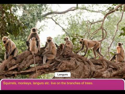 Animals that live on Trees