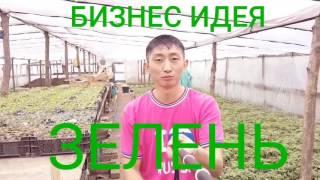 видео Технология выращивания петрушки