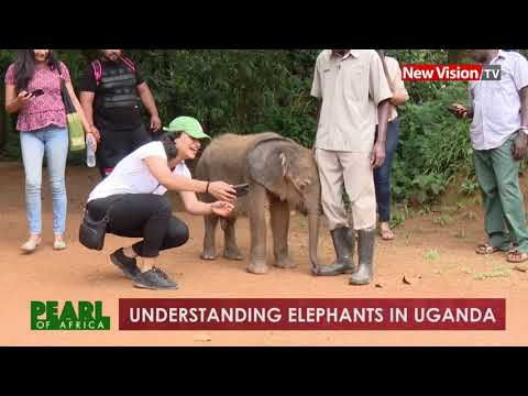 Understanding elephants in Uganda