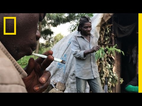 Risking Arrest, Pygmies Deal Weed to Survive in the Congo | National Geographic