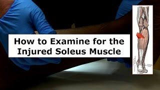 How to Examine for the Injured Soleus Muscle