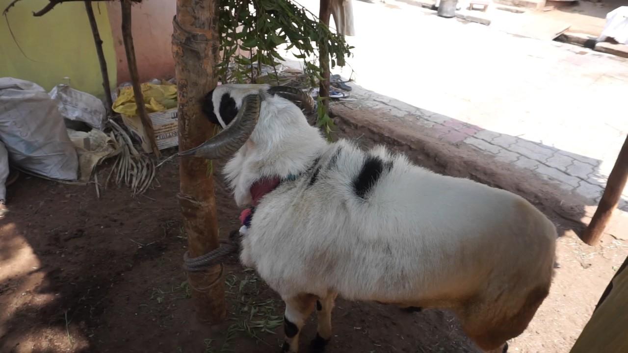Sheep Farm In Tamilnadu