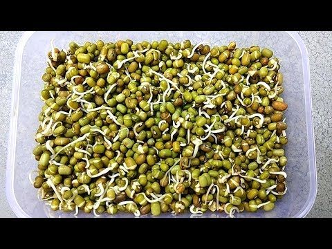Easy and fast seed germination process | Grow seeds faster