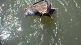 Video Pescaria de arraia rio das almas download MP3, 3GP, MP4, WEBM, AVI, FLV Juli 2018