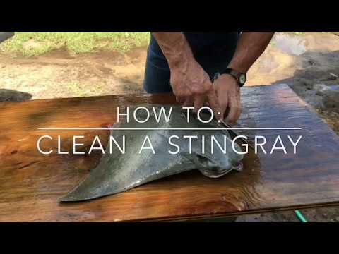 HOW TO: Clean A StingRay
