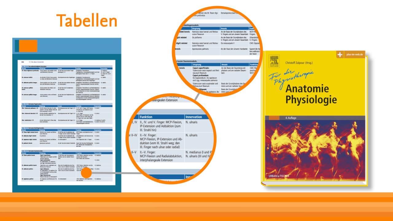 Anatomie Physiologie für die Physiotherapie von Christoff Zalpour ...