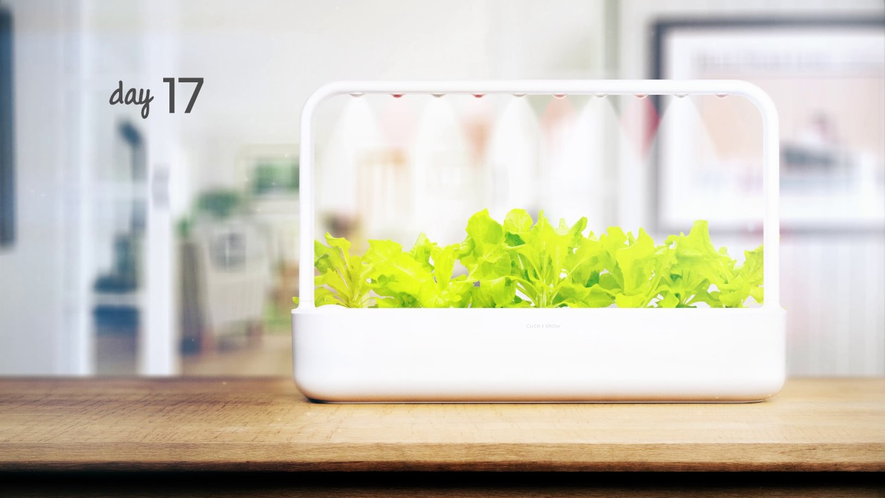 Nice Lettuce Time Lapse: Click U0026 Grow Smart Garden 9