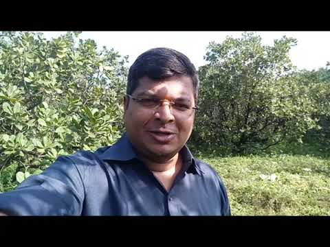 (Property Sold) Farm House Land For Sale in Konkan #Episode 2