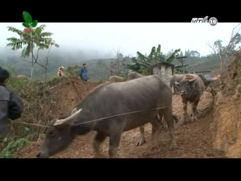 Chợ trâu bò miền núi - VTC16
