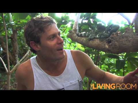 The Bondi Vet assists Kula Eco Park Fiji with the release of their captive bred Crested Iguanas.