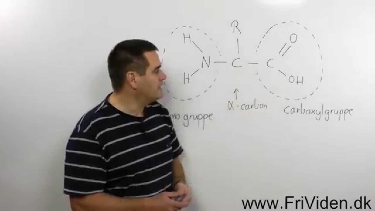 hvad er proteiner opbygget af