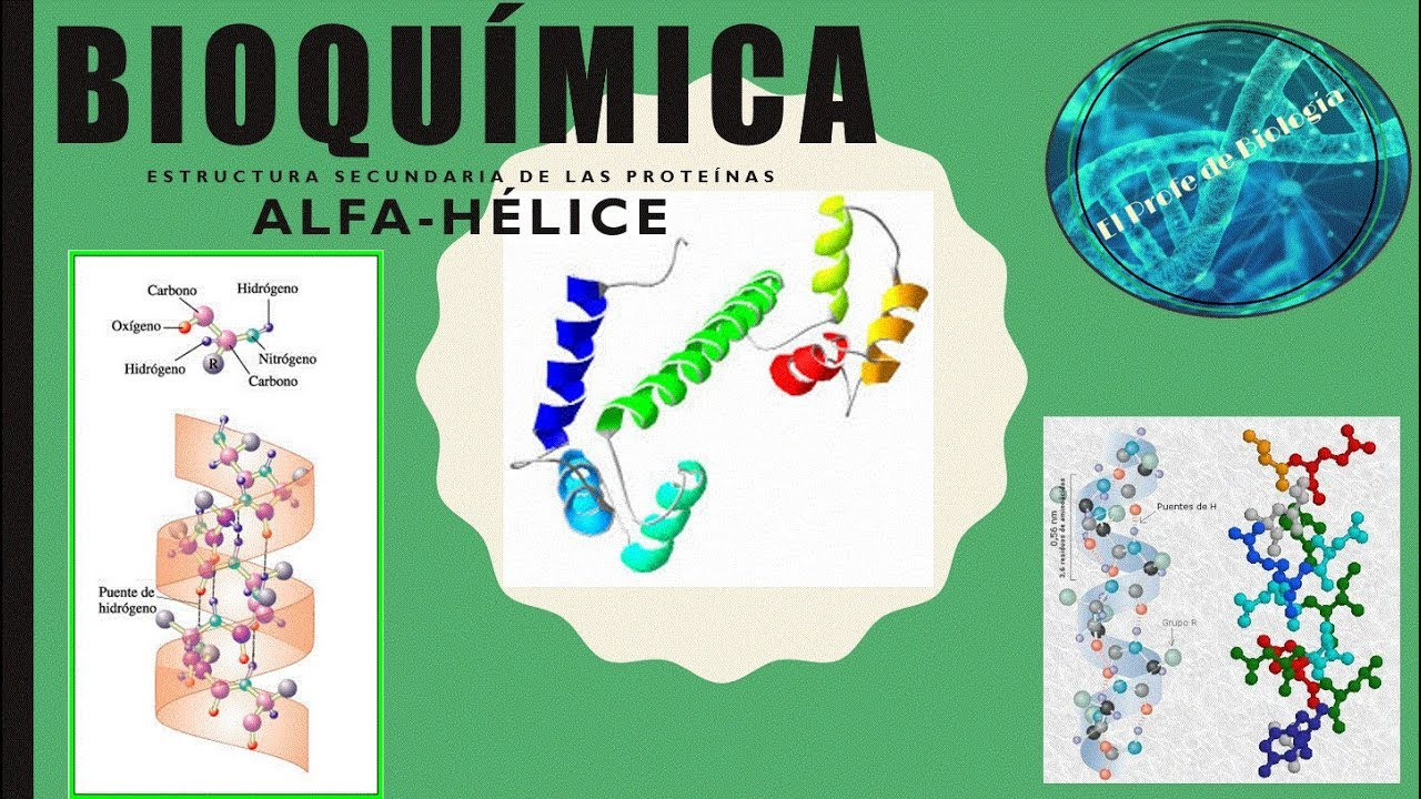 Hélice Alfa Estructura Secundaria De Las Proteínas Youtube