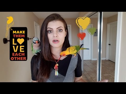 How to Get Different Parrots To Get Along   PARRONT TIP TUESDAY