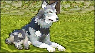 ВОЛЧЬЯ СЕМЬЯ настоящая жизнь зверей в диком лесу симулятор жизни животных в   видео от #ФГТВ
