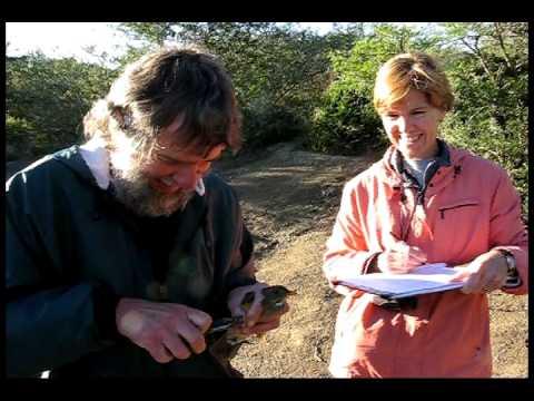 Birding at an African Waterhole