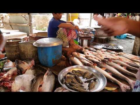 Walking Catfish, Yellowtail catfish, Snakehead murrel, Silver Carp & Others Carp Fish Cutting