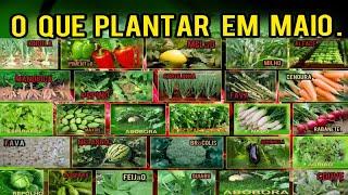 Conheça quais as Hortaliças que Devemos Plantar no mes de Maio