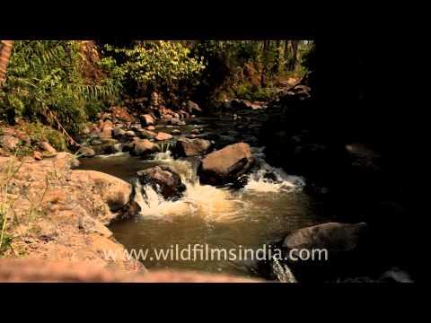Sumatra - The 'Africa of Southeast Asia'