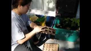 Wimolnan Planting her Alyssum Seeds