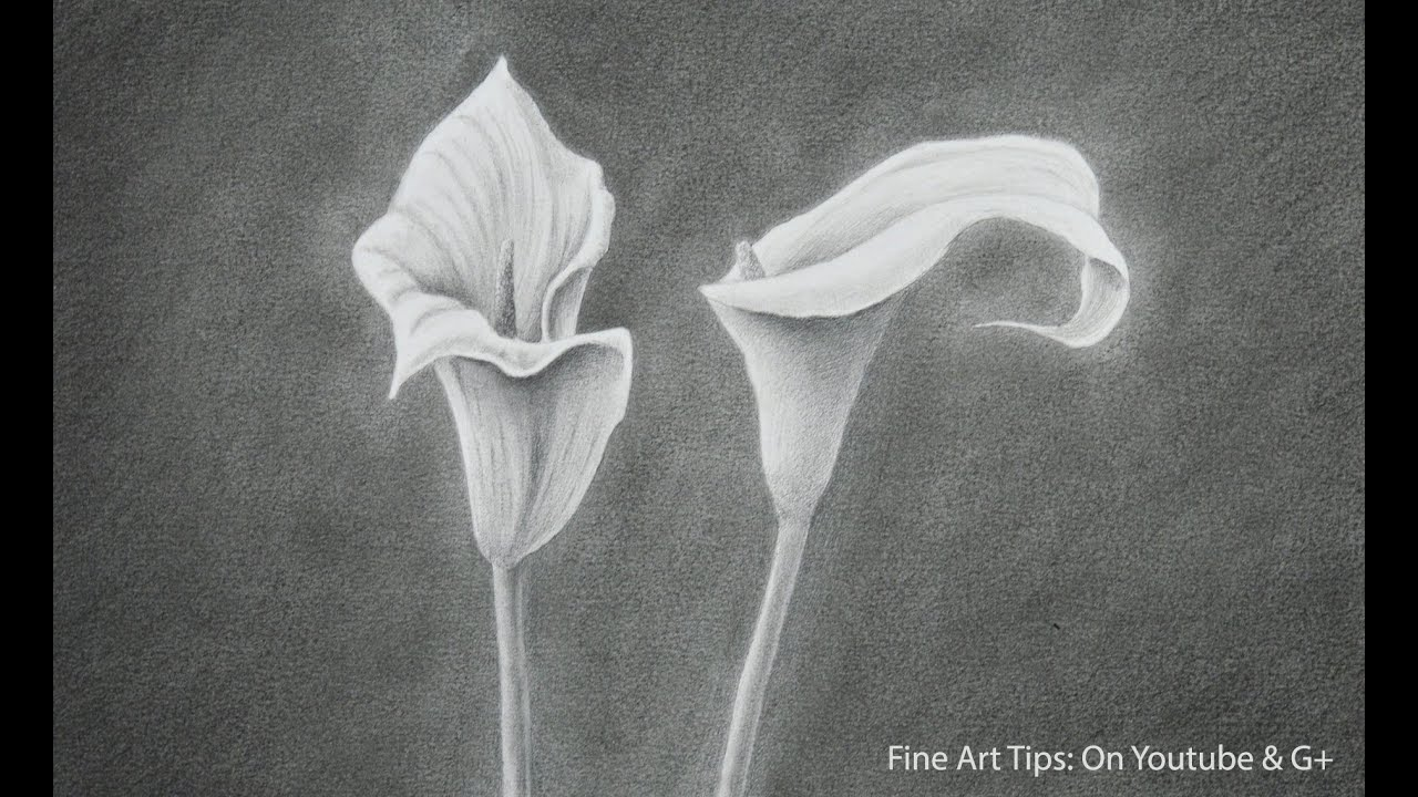 How To Draw A Calla Lily How To Draw Flowers Youtube