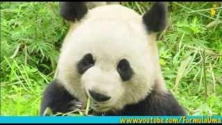 видео Живая Планета - это дикие и домашние животные, экология и растения. Бесплатные объявления.