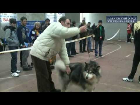 Выставка собак в Ереване