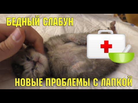 Котёнок борется за жизнь   спасение котёнка   больница