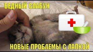 Котёнок борется за жизнь | спасение котёнка | больница