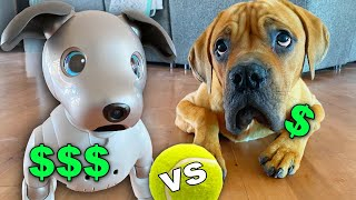 $3,000 vs $300 Dog Challenge! (Blind Dog reacts to Robot Dog)