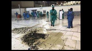 Locust Plague - End Time Prophecy Unfolding!