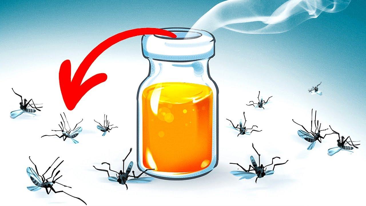 ١٥ طريقة طبيعية للتخلص من البعوض في فنائك الخلفي