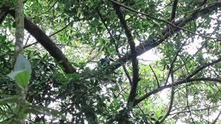 Tierisches Costa Rica