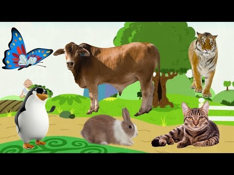 Bé học con mèo, con chó, con gà, con vịt, Dạy bé học online