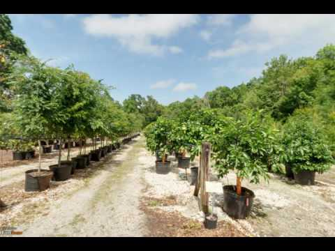 Hickory Creek Nursery | Jacksonville, FL | Nursery