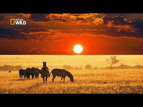 Savannah Life Wild Africa [National Geographic Documentary H