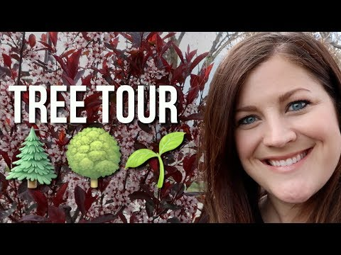 New Tree Tour! 🌳🍁🍃// Garden Answer