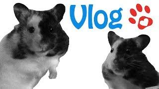 Hamster unvergessen ♥ Erinnerung an meine Fellpopos ♥ Abschied verarbeiten