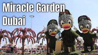 Miracle Garden Dubai 2020 Season 8 Youtube