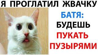 Мемы и Приколы с Котами 2021 года. Подборка смешные мемчики про котов за 11 Октября #shorts