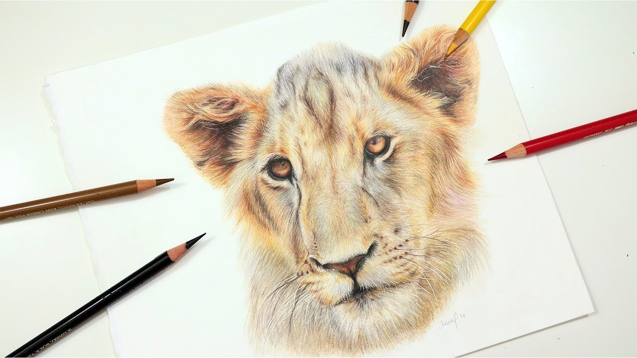 Learn to Draw a Realistic Lion using Colored Pencil ...