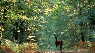 A la découverte de la Forêt - Documentaire francais sur la Nature