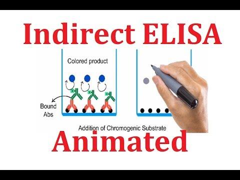 Indirect ELISA: Animated explanation
