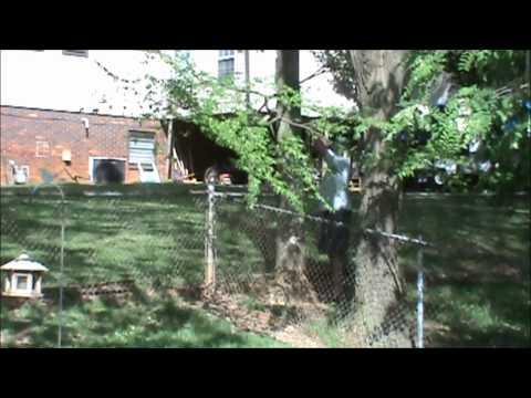 Bigfoot Sighting - Eye Witness Interview