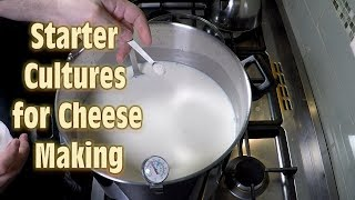 Making Squeaky Cheese Curd