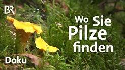 Pilze finden: Tipps vom Schwammerl-Experten | Zwischen Spessart und Karwendel | Doku